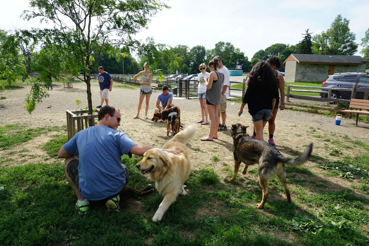 The Carnegie Dog Park. Photo by Tracy Certo.